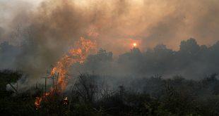 Api membakar lahan gambut di Pekanbaru, Riau, Sabtu (27/9). Kencangnya tiupan angin membuat petugas dan warga kewalahan memadamkan api. ANTARA FOTO/Rony Muharrman/ss/pd/14