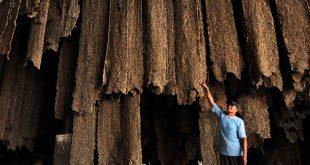 Pekerja melakukan proses pengolahan bahan olah karet di pabrik PT Bangkinang di Pekanbaru, Riau, Rabu (27/8). Data Dinas Perkebunan Provinsi Riau menyatakan belasan pabrik pengolah karet terpaksa mengurangi produksi, dan tiga pabrik diantaranya tutup dan beralih ke bisnis karet akibat kekurangan bahan baku ditambah harga komoditas karet yang terus merosot di pasar internasional. ANTARA FOTO/FB Anggoro/ed/ama/14.