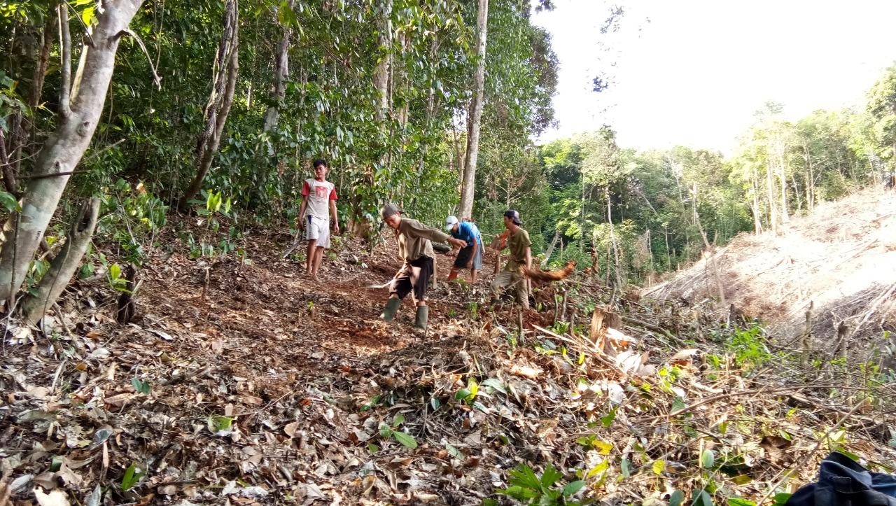 Para peladang membuat sekat bakar (ngararakatn) di Kampung Nek Kompokng, Desa Anekng, Kab. Landak tahun 2018 lalu.