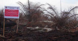 Segel KLHK RI pada konsesi perkebunan kelapa sawit