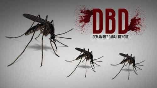 Nyamuk demam berdarah/net