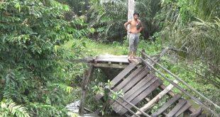 Jembatan Kayu yang mengubungkan dua Dusun di Desa Temiang Sawi